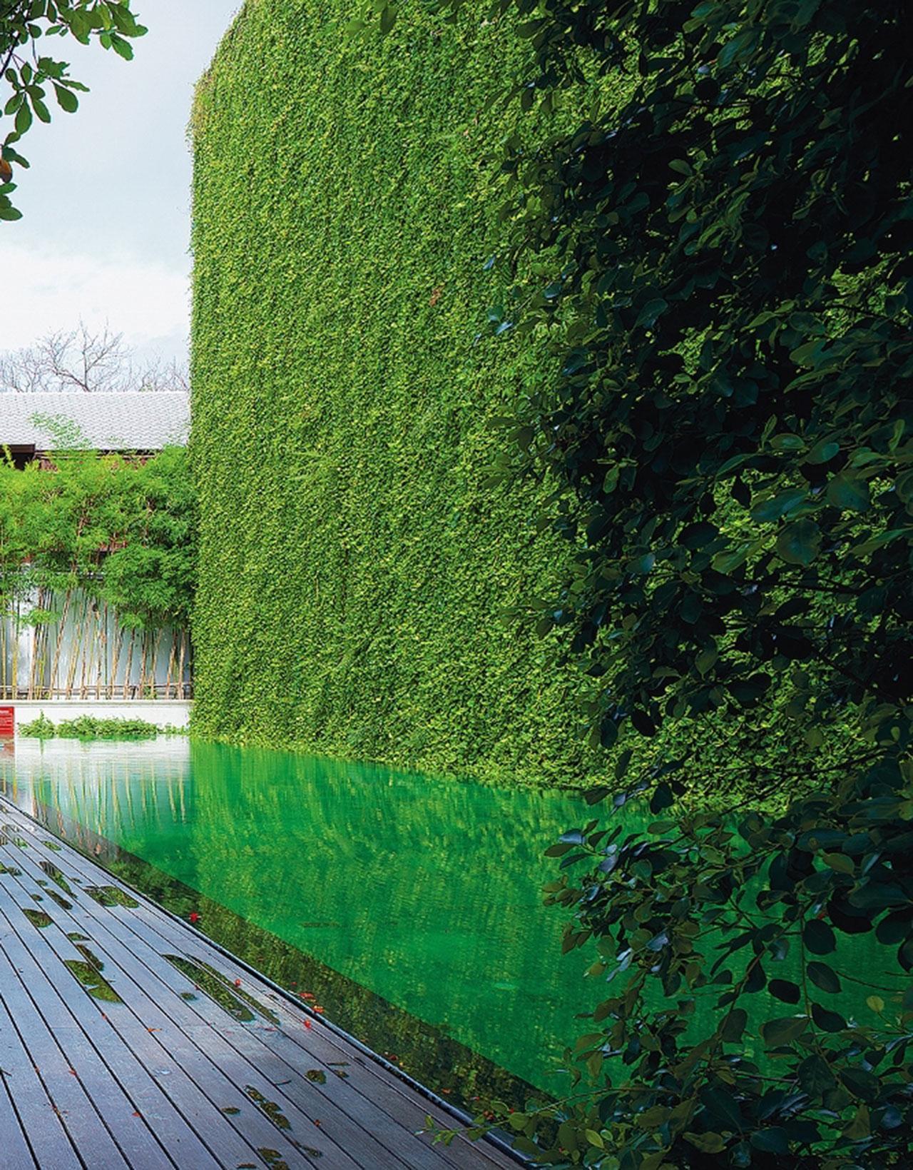 ต้นไม้ที่พบเห็นได้ง่ายและไม่ต้องดูแลรักษามากอย่าง พลูด่างเมื่อนำมาใช้บนผนังสวนแนวตั้งก็ทำให้มุมดังกล่าวดูโดดเด่นและสวยงามได้ไม่ยาก