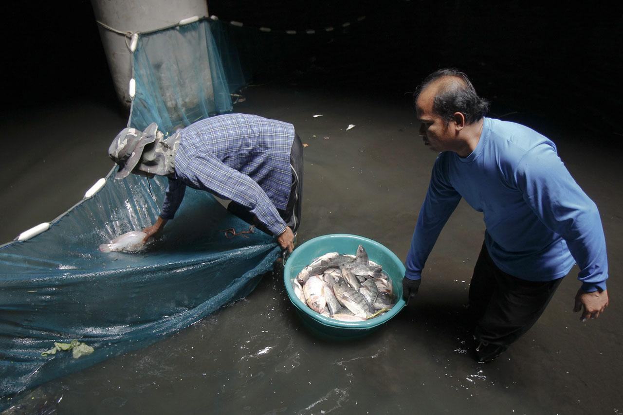 เจ้าหน้าที่จากกรมประมง จับปลา ออกมาจากซากตึก