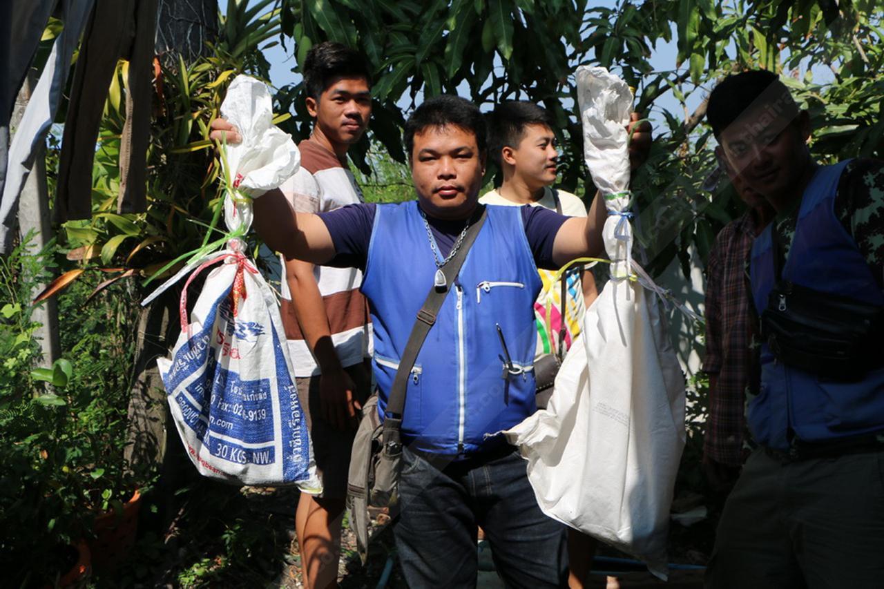จับ 2 งูเห่าตัวผู้และตัวเมียได้สำเร็จ พร้อมกับนำใส่ถุงปุ๋ยมัดแน่นเรียบร้อย