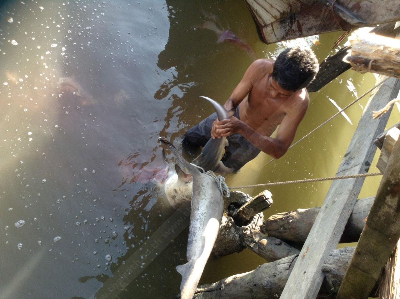 ชาวบ้านช่วยกันลากซากฉลามขึ้นฝั่ง เพื่อตรวจสอบ