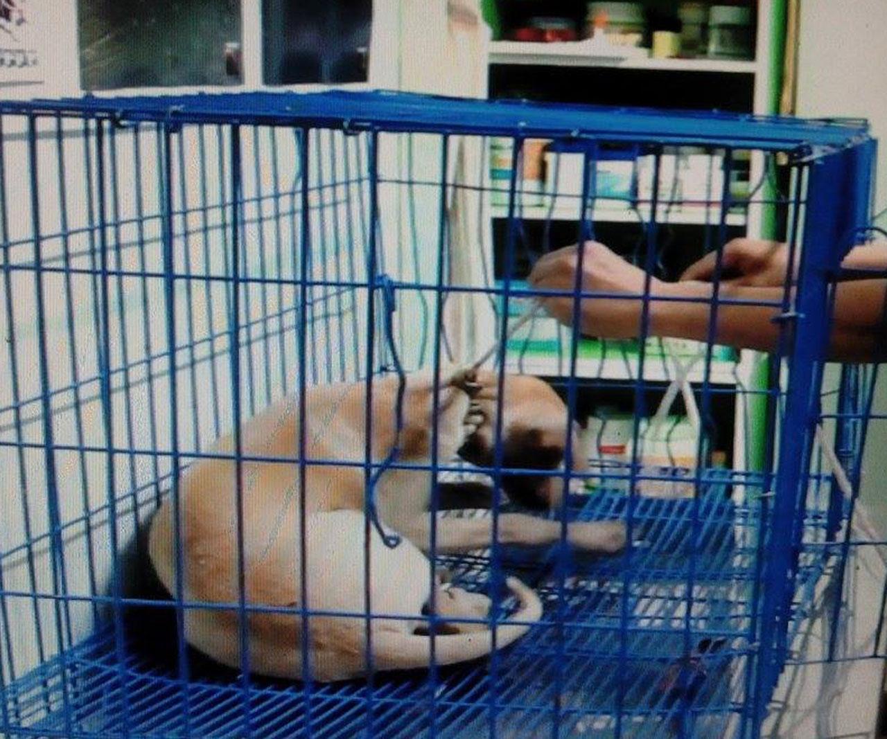 นำสุนัขที่ได้รับการช่วยเหลือ ส่งสัตวแพทย์รักษา