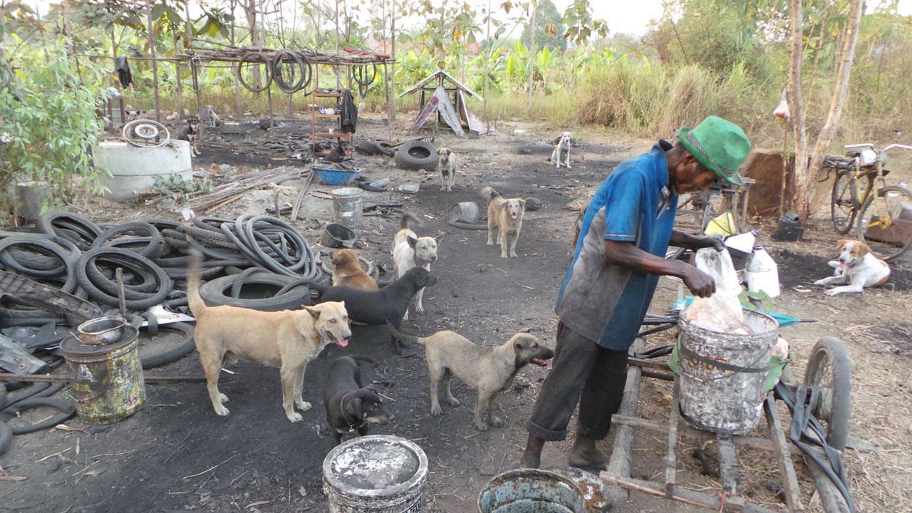 ทุกวันต้องออกไปไร่ไรเศษอาหารจากร้านอาหาร ได้มาก็เอาไปเลี้ยงสุนัขที่มีกว่า 30 ตัว