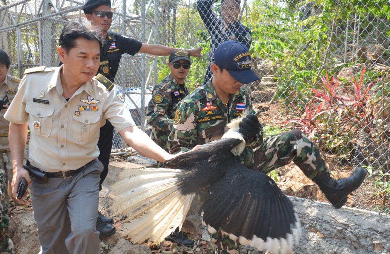 ขณะ จนท. ทำการตรวจยึด นกสัตว์ป่าคุ้มครอง เมื่อ 3 ก.พ. 58 ที่ผ่านมา