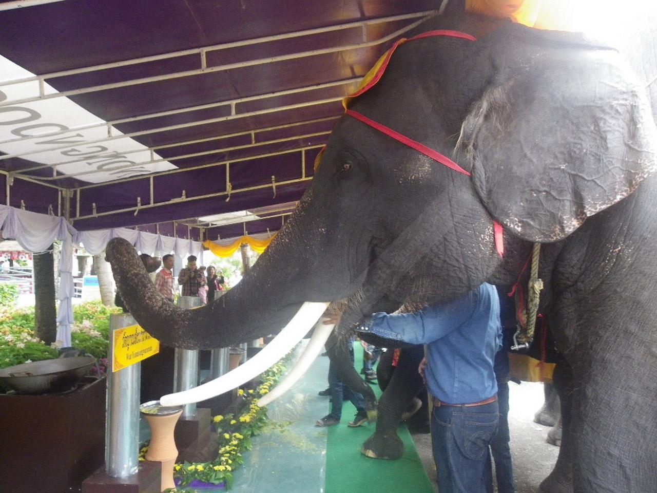 ช้างแสนรู้ ร่วมหล่อเทียนพรรษา