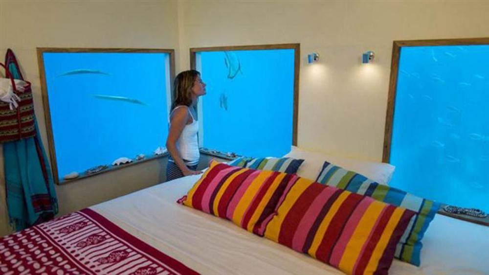 ห้องพักที่มองเห็นปลาสวยงาม