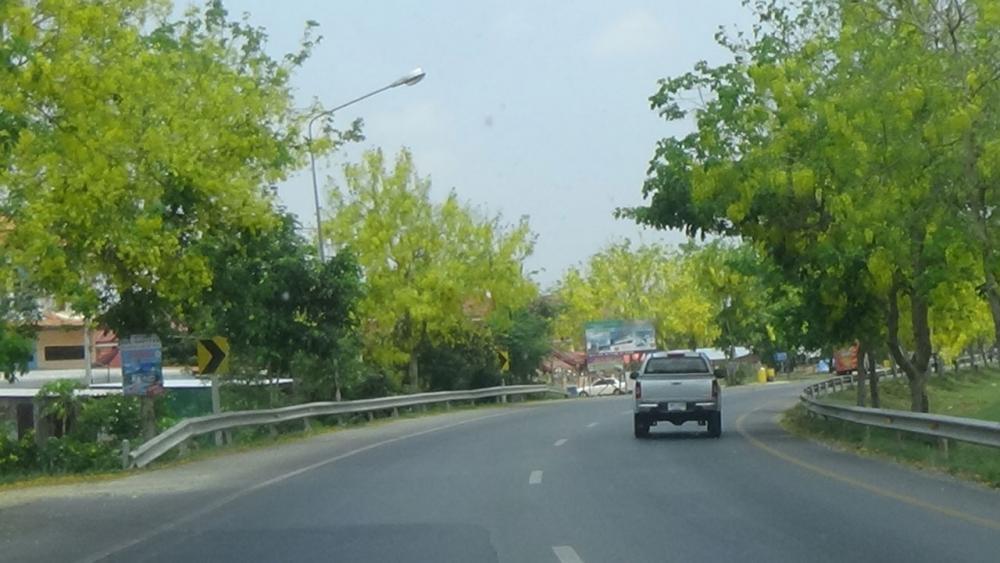 แม้จะแล้ง แต่ถนนเส้นนี้ ก็ยังสวยสะดุดด้วย 'ดอกคูณ'