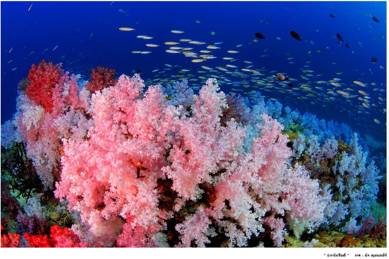 ปะการังสีสด
