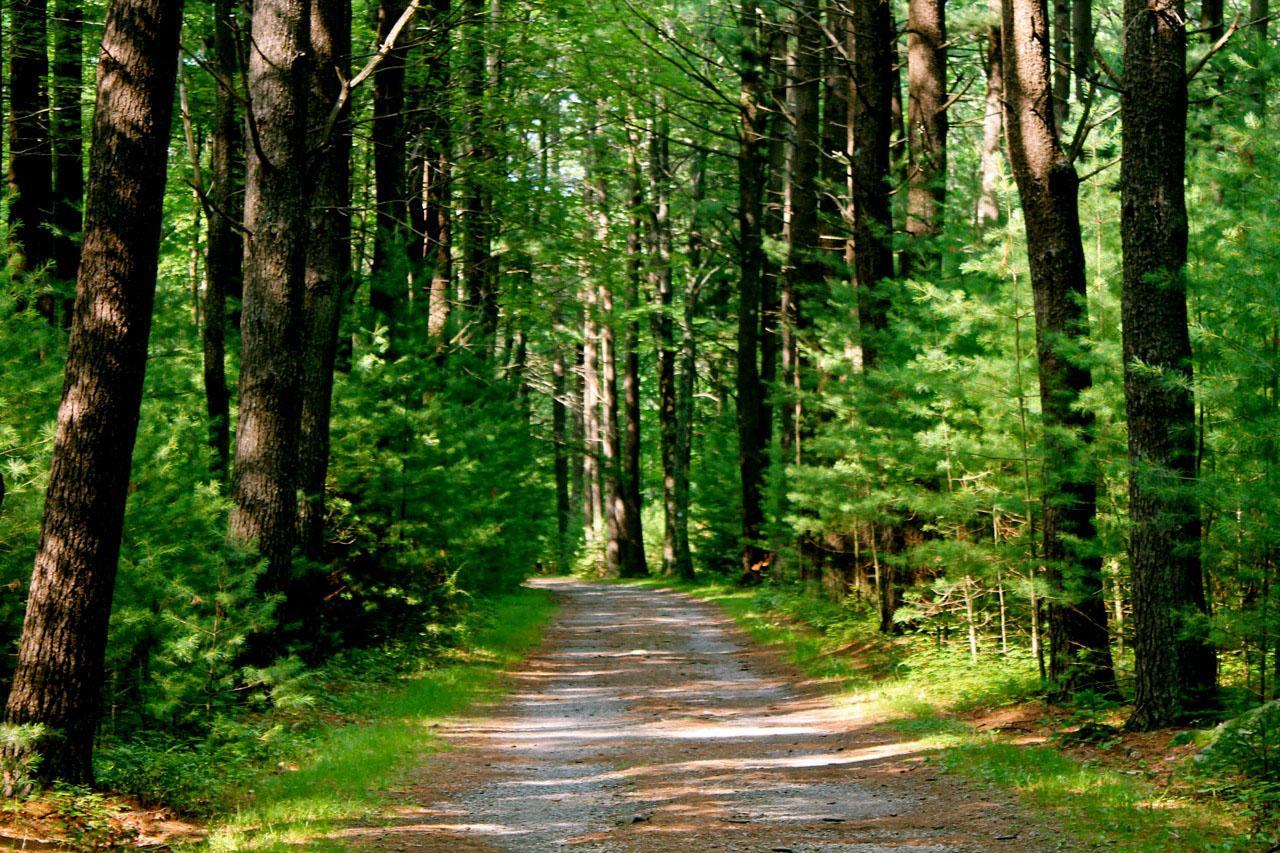 ป่าสนเขียวขจีมีมนต์เสน่ห์ให้ค้นหา