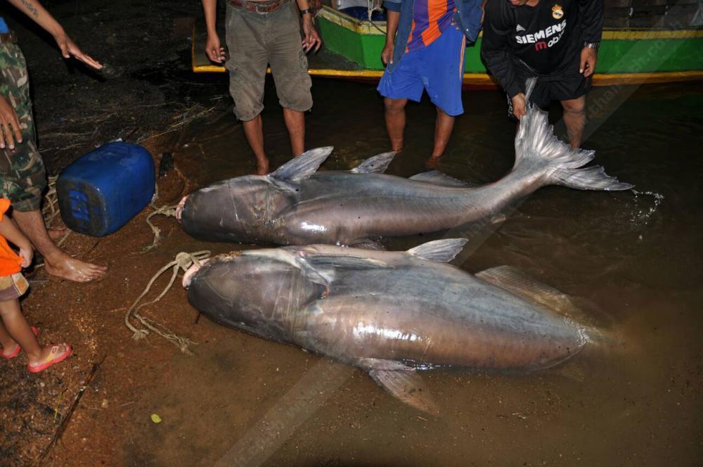 เทศกาลกินปลาแก่งกระจาน 10-19ธ.ค.นี้
