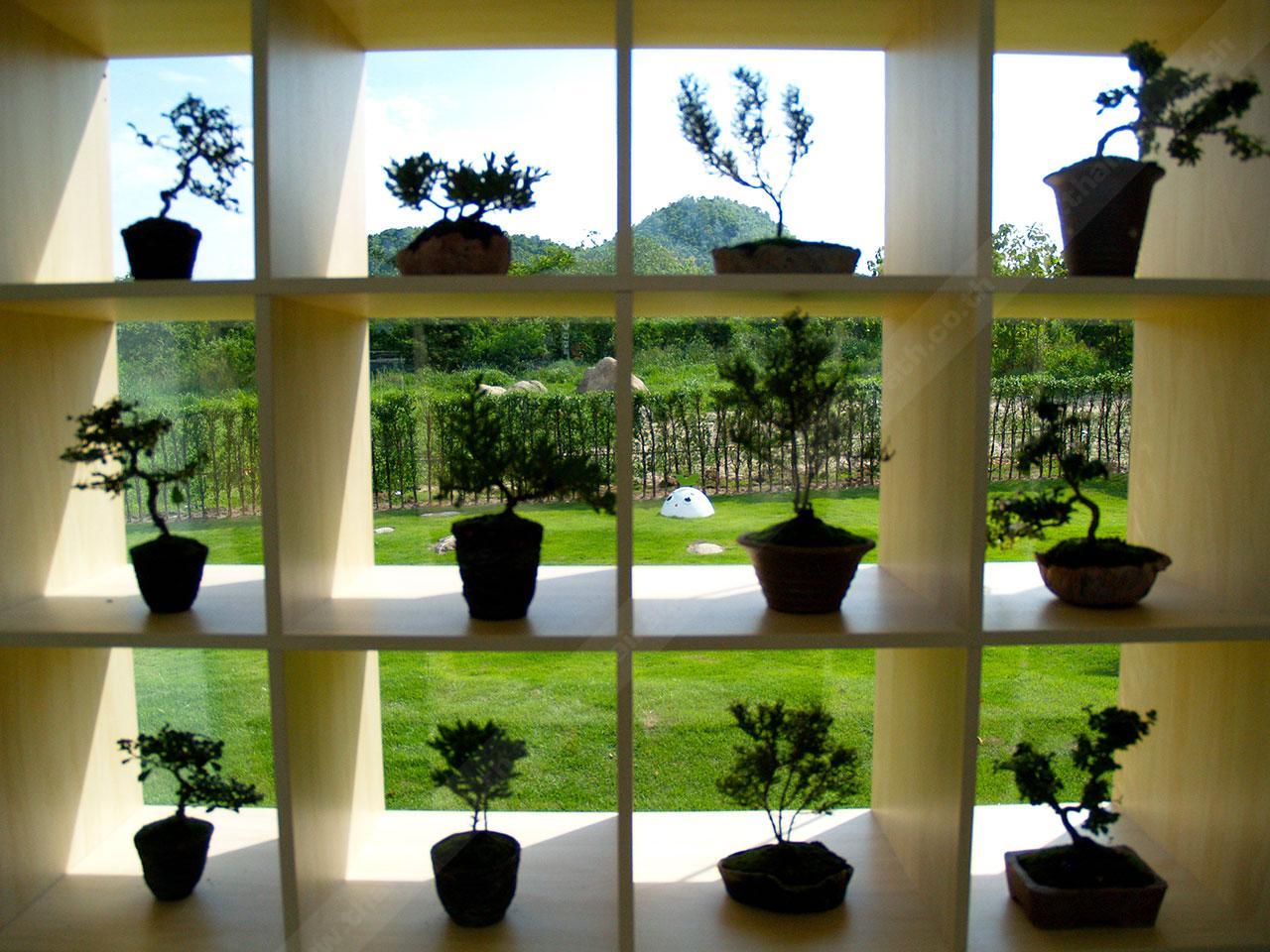 ต้นบอนไซ ในโซน CORO Me