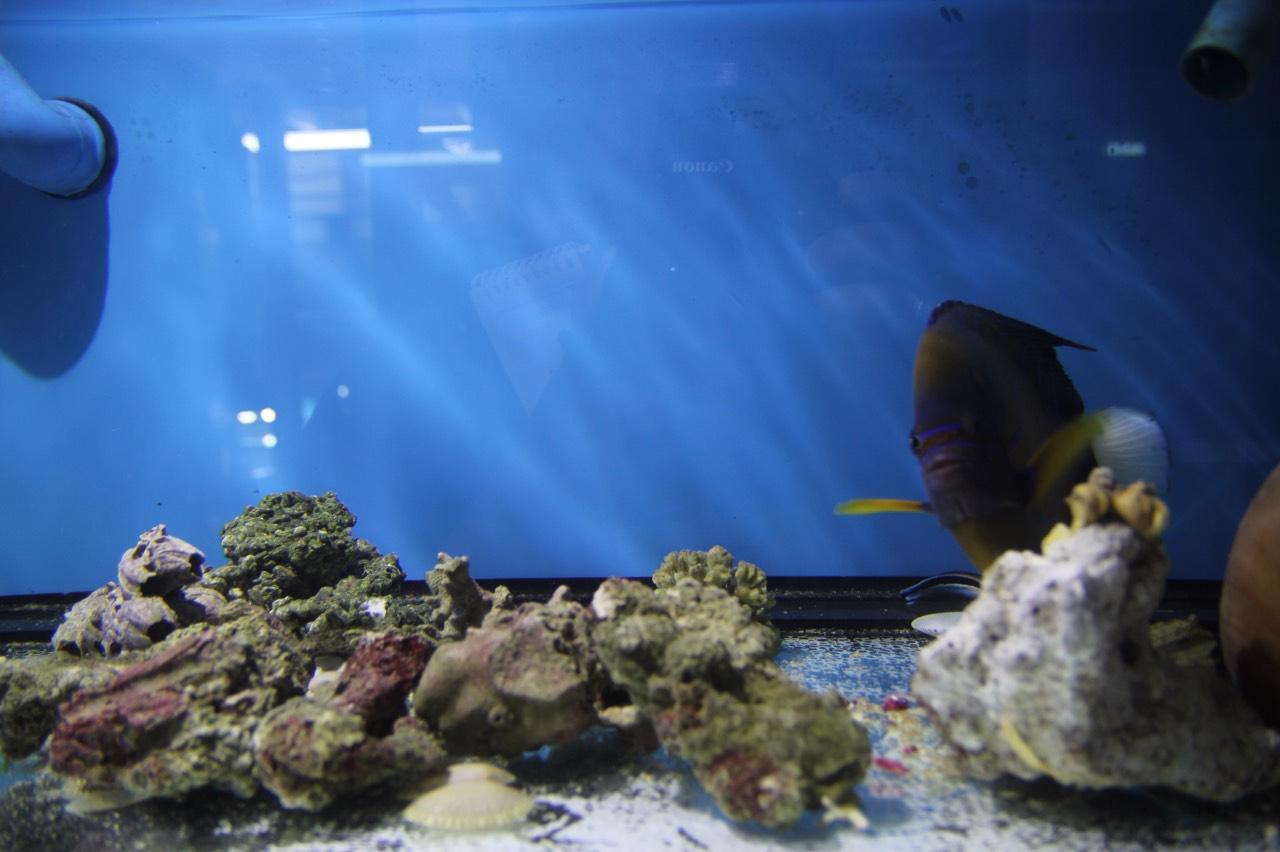 ซากปะการัง และปลาสวยงาม ที่ จนท.หน่วยอนุรักษ์ทรัพยากรทางทะเลและชายฝั่ง จ.สุราษฎร์ธานี ตรวจยึด
