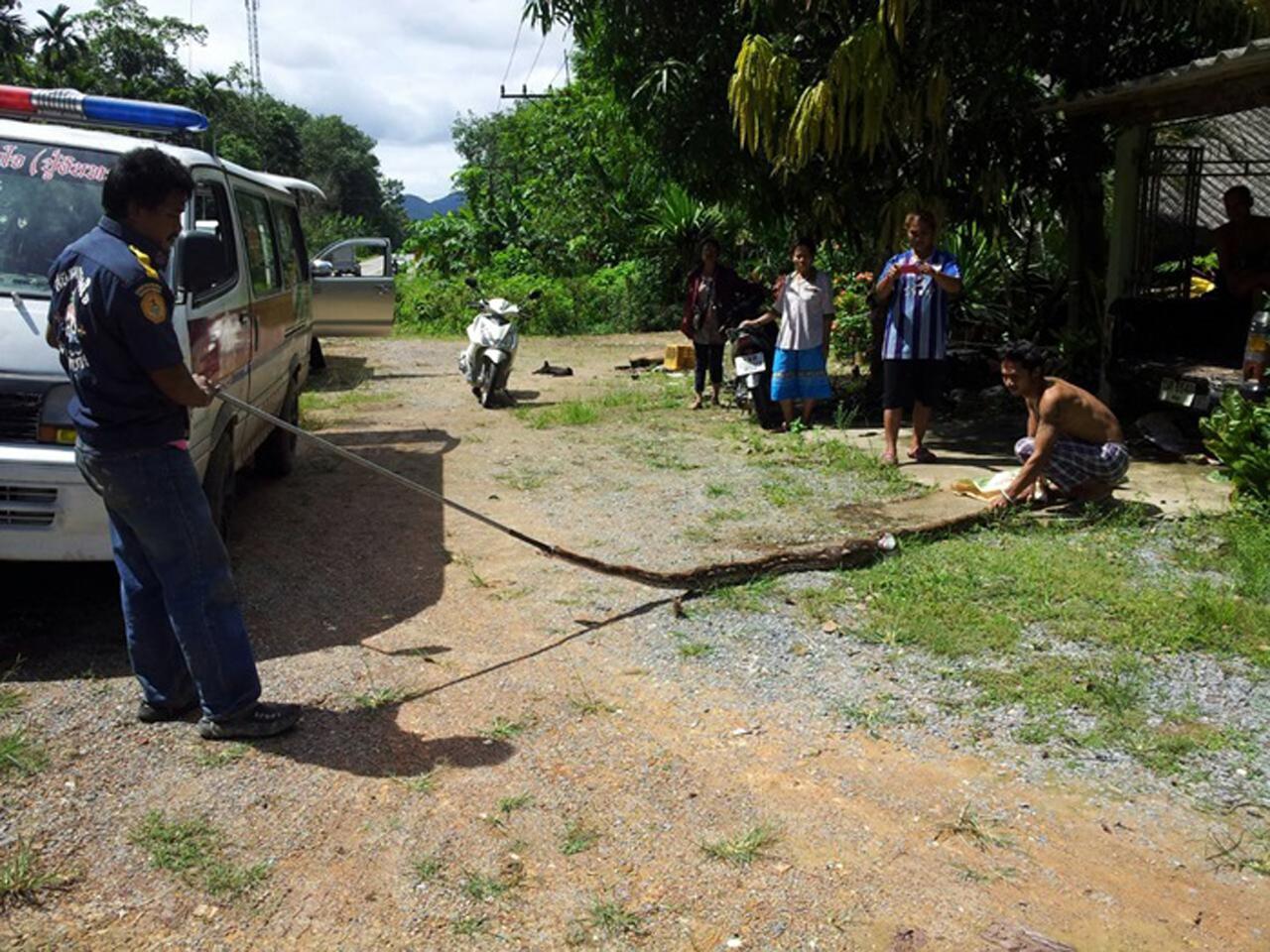 จนท. จับงูเหลือมตัวยาว 4 ม. ที่เข้าไปเขมือบไก่ ชาวบ้าน