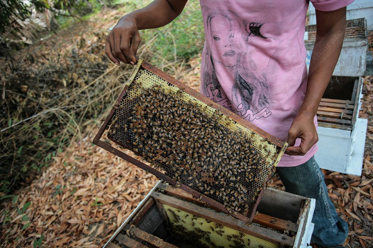 ผึ้งพึ่งพา