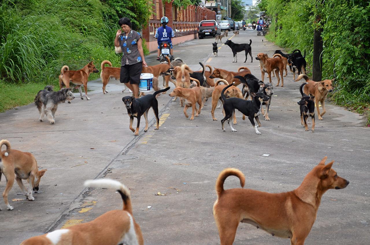 เมื่อคนกินนมสุนัขเท่ากับเป็นการแย่งน้ำนมลูกสุนัขกิน ทำให้ลูกสุนัขได้รับสารอาหารไม่เพียงพอ เนื่องจากสุนัขมีปริมาณน้ำนมค่อนข้างน้อย