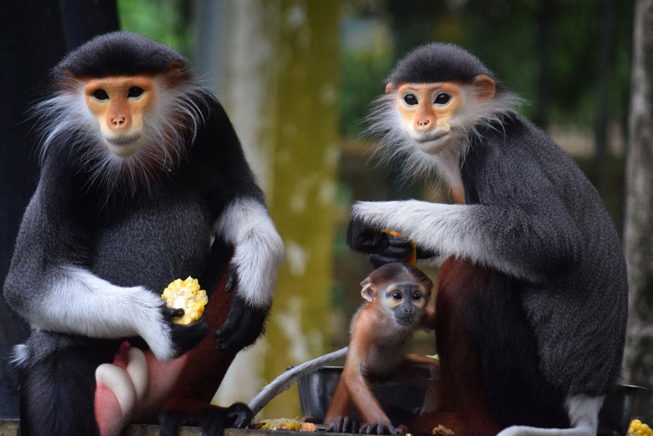 ความน่ารักของลูกค่าง 5 สี ที่เกาะอยู่ที่ท้องแม่ของมัน  สมาชิกใหม่ สวนสัตว์เปิดเขาเขียว ชลบุรี