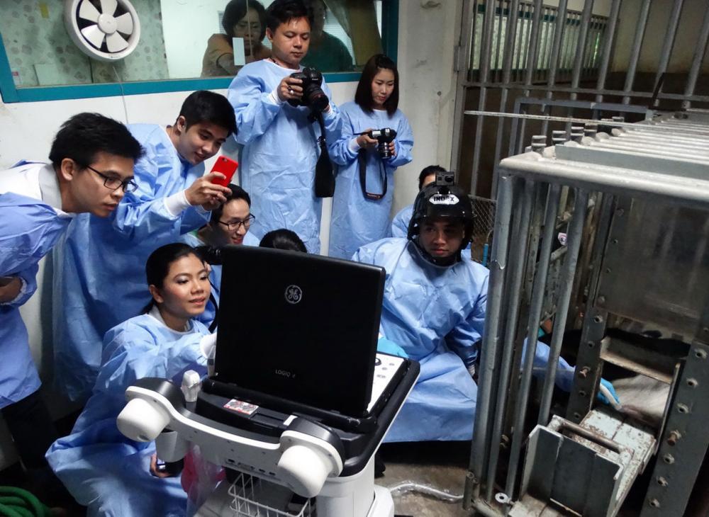 ทีมงานวิจัยหมีแพนด้า กำลังตรวจสอบ ยืนยันการตั้งท้องที่2 ของหลินฮุ่ย
