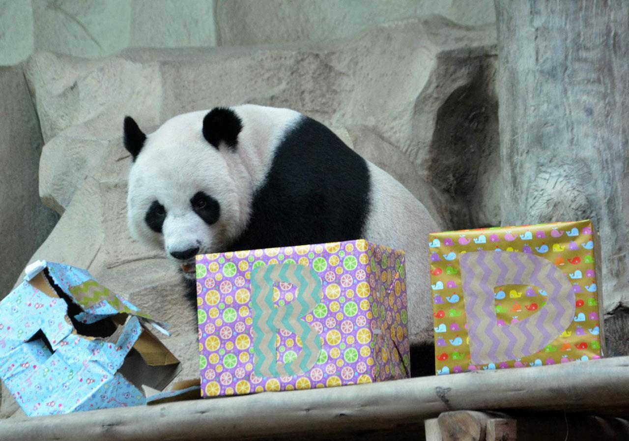แพนด้า ช่วงช่วง แกะกล่องของขวัญ
