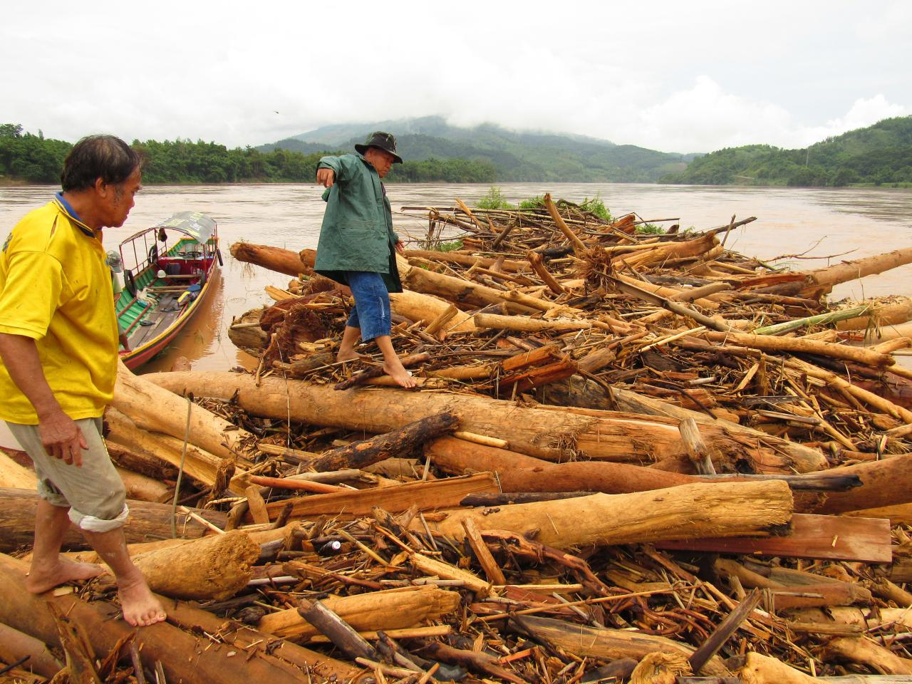 ท่อนซุงที่ไหลมาตามลำน้ำโขง หลังฝนตกต่อเนื่อง ชาวบ้านนำไปขายสร้างรายได้เสริม