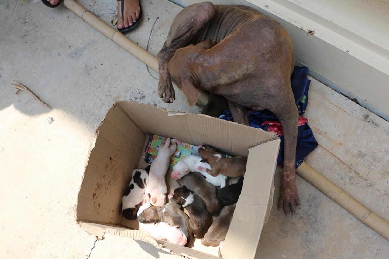 ลูกสุนัข และ แม่สุนัขที่ช่วยออกมาได้