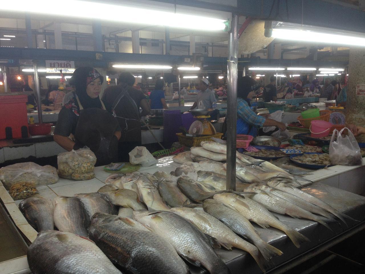 ปลาทะเลเริ่มขาดตลาด