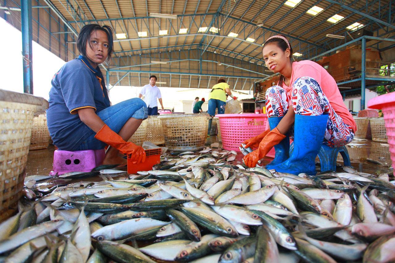 พบราคาอาหารทะเลในตลาดโรงเกลือ ปรับราคาสูงขึ้น