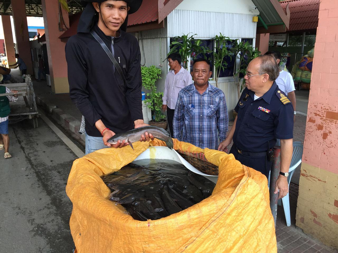 ชาวกัมพูชาบรรทุกปลาน้ำจืด จากฝั่งเขมรเข้ามาส่งขายในประเทศไทยเพิ่มขึ้น