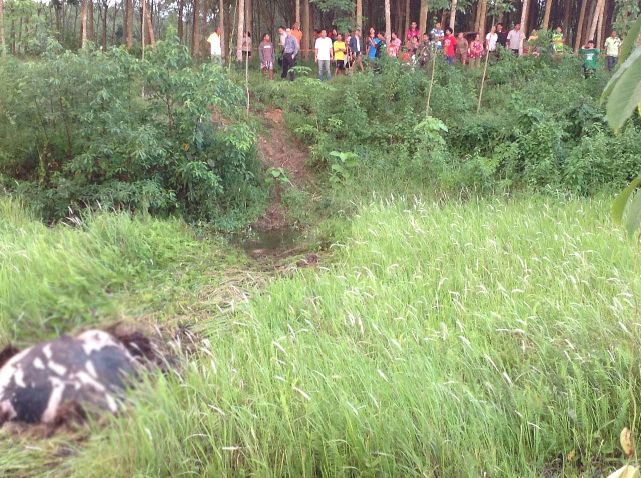 สภาพซากช้างป่าที่นอนตายอืดในสระน้ำ