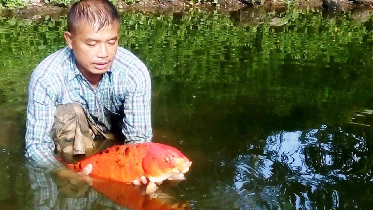 สภาพอากาศที่ยังร้อนจัด ทำให้ปลาในแม่น้ำ ที่ จ.น่าน ตายนับพันตัว
