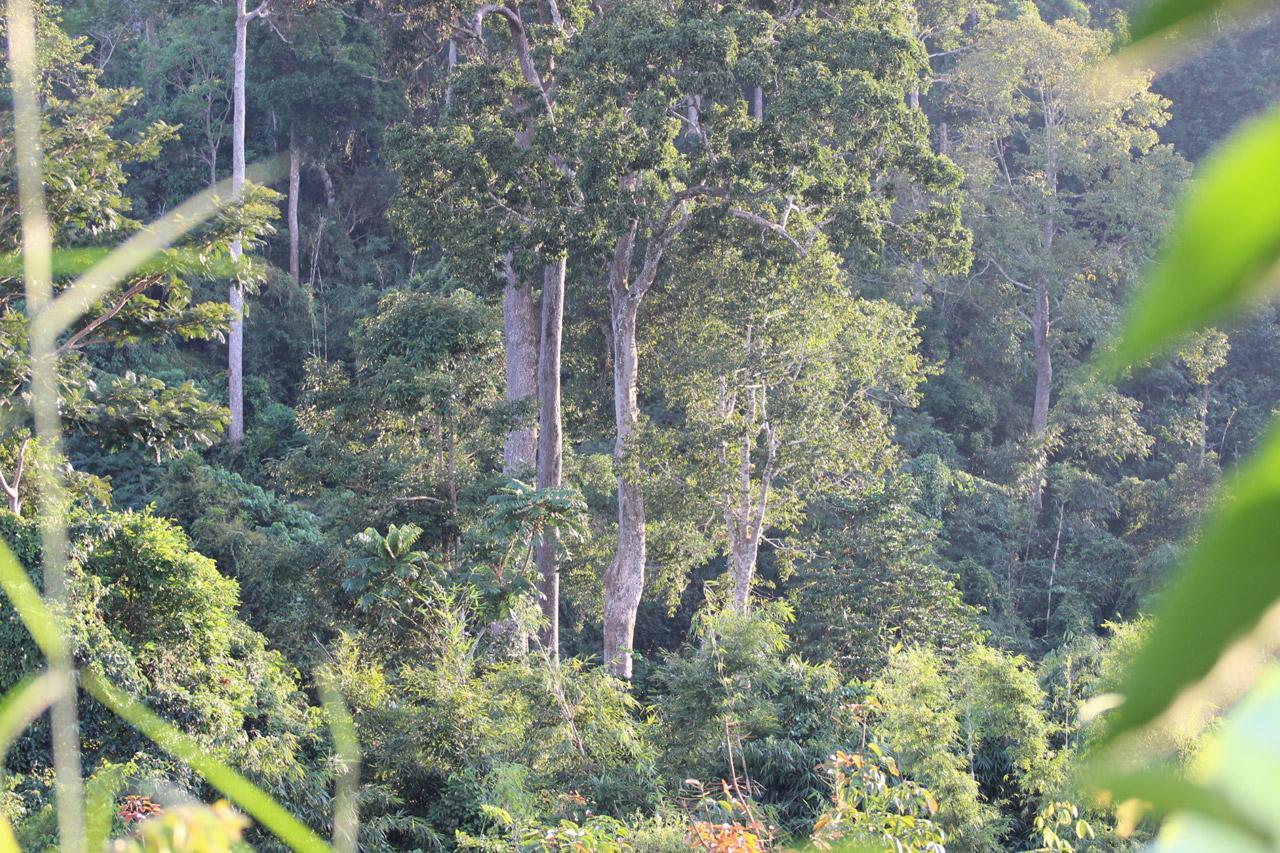 ป่าชุมชนบ้านห้วยใหญ่ จ.ชุมพร เป็นป่าดงดิบแบบภาพใต้ที่ยังมีความสมบูรณ์มากสุด