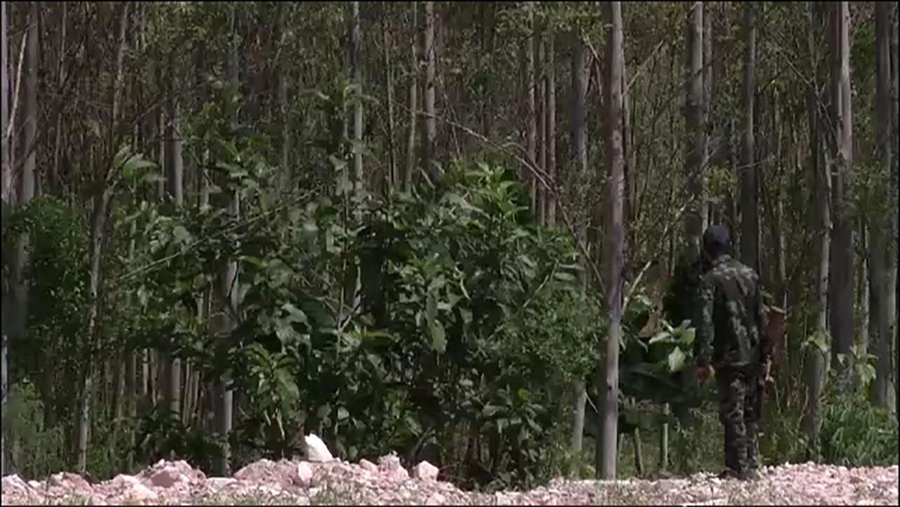 คนงานกำลังเจาะไม้กฤษณาเพื่อให้เกิดน้ำมัน