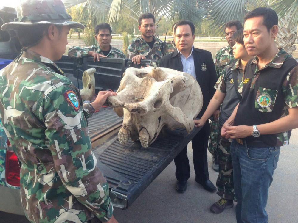 เจ้าหน้าที่พบซากช้างป่า คาดตายมาแล้ว 3 ปี ในป่าแก่งกระจาน
