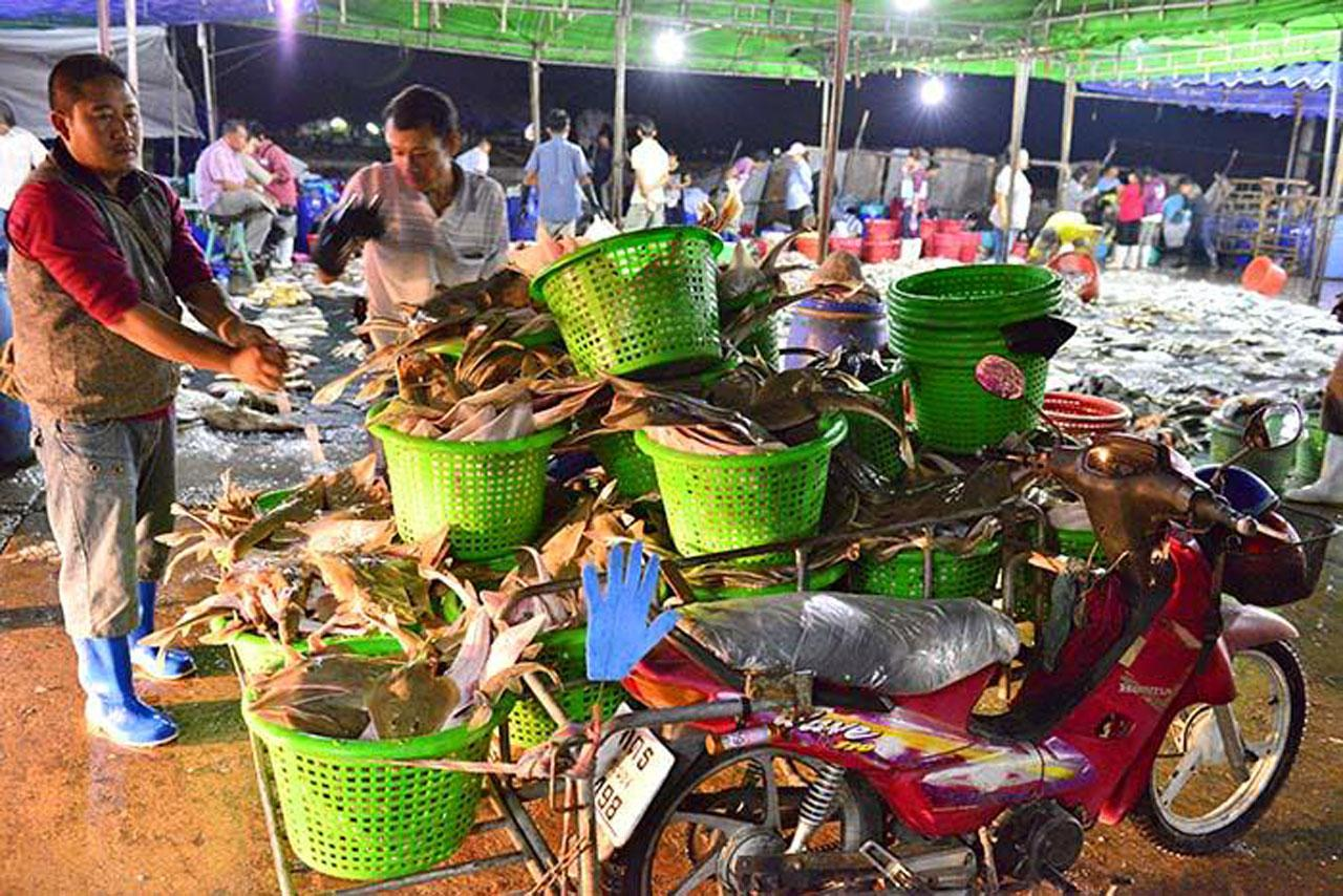 ปลาโรนันจำนวนมากกำลังไปถึงผู้บริโภค (ภาพจาก facebook :  Go Travel Photo)