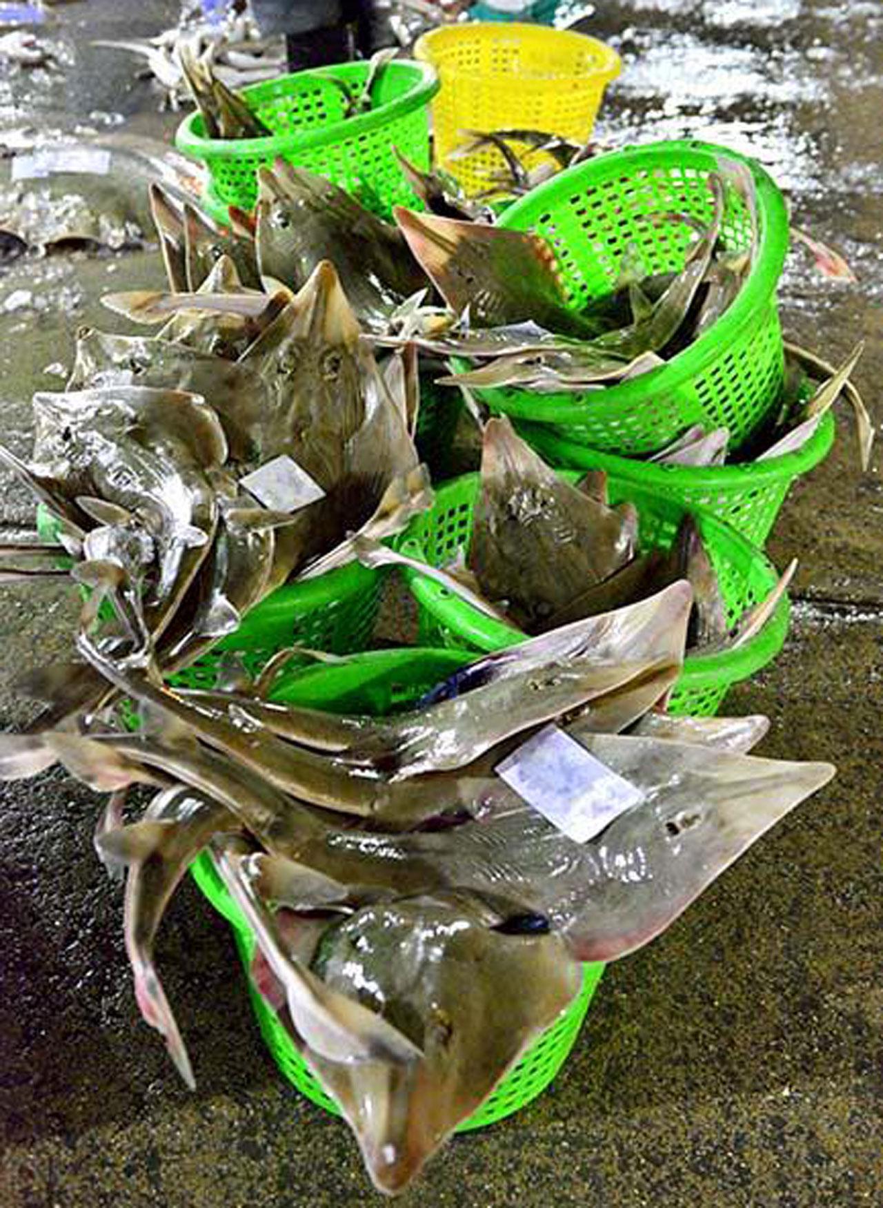 ภาพปลาโรนันนับร้อยตัว อยู่ในตะกร้า ที่ตลาดปลา (ภาพจาก facebook :  Go Travel Photo)