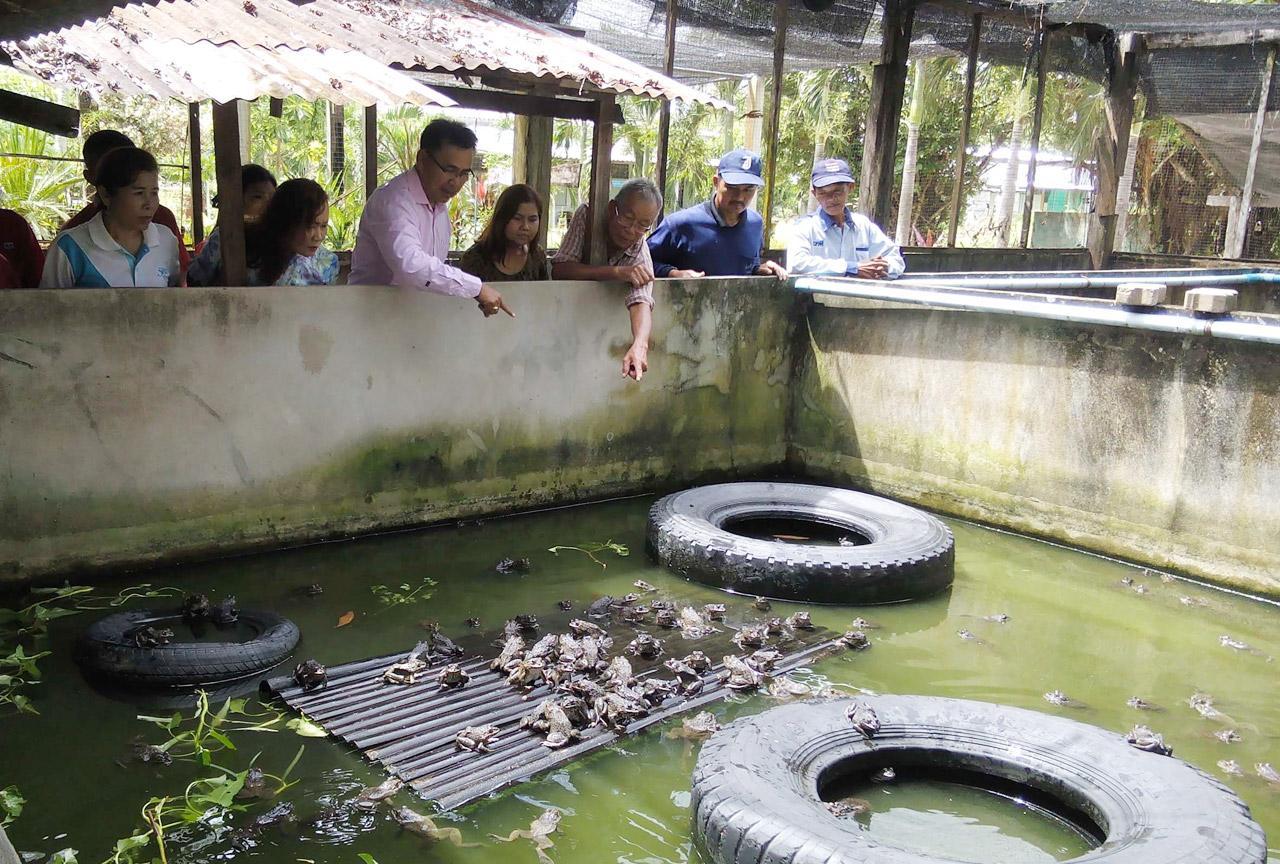 วิทยากรแนะนำ บ่อเลี้ยงกบต้องสะอาด ไม่คาว น้ำในบ่อต้องสูงไม่เกินสิบเซนติเมตร มีที่สูงให้กบมาพักกินอาหาร