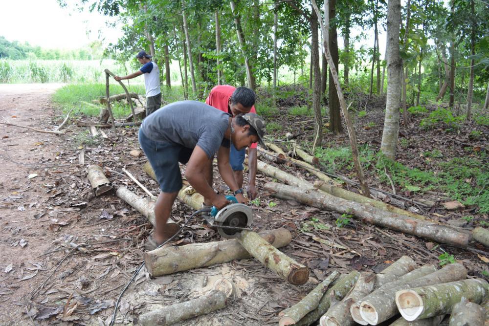 เตรียมไม้สำหรับใช้ประโยชน์