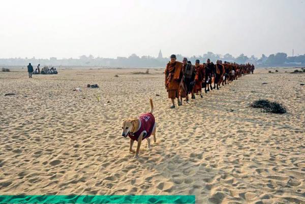 """พระสงฆ์เดินธุดงค์ไปตามถิ่นทุรกันดารโดยมี """"เจ้าโส"""" สุนัขแสนรู้ของวัดไทยพุทธคยา เดินนำหน้าติดตามตลอดเส้นทาง."""