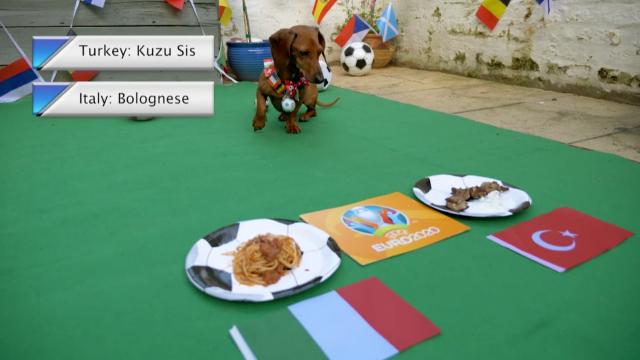 """แม่นหรือไม่ """"สุนัขพันธุ์ดัชชุน"""" ทายผล """"ตุรกี-อิตาลี"""" คู่เปิดหัวยูโร 2020 (คลิป)"""