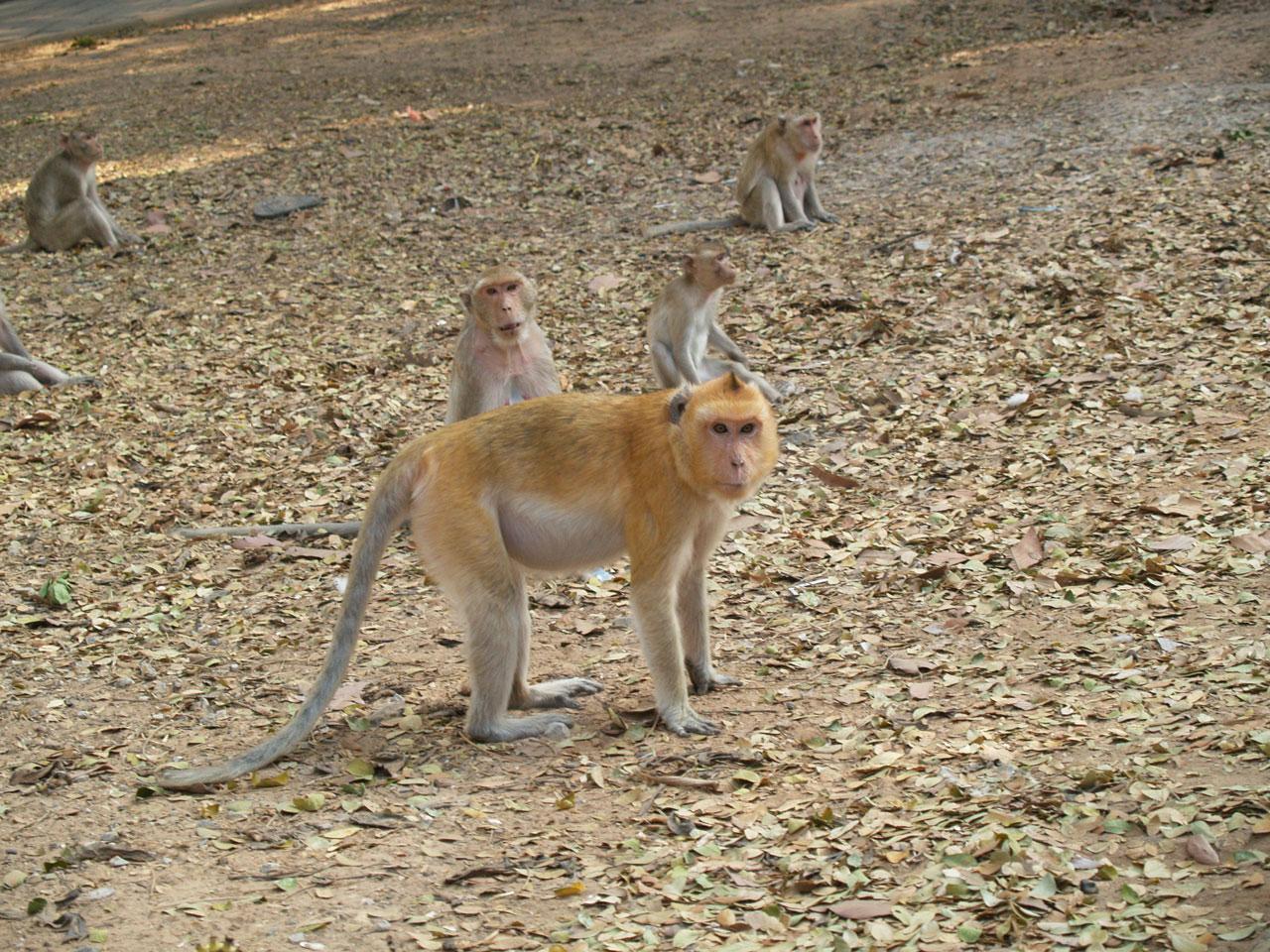 ลิงขนสีทองสะดุดตา