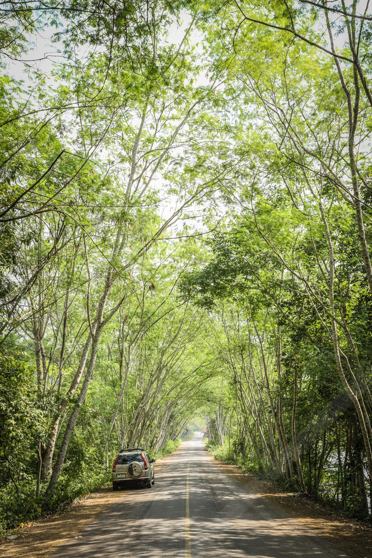 ป่าสมบูรณ์
