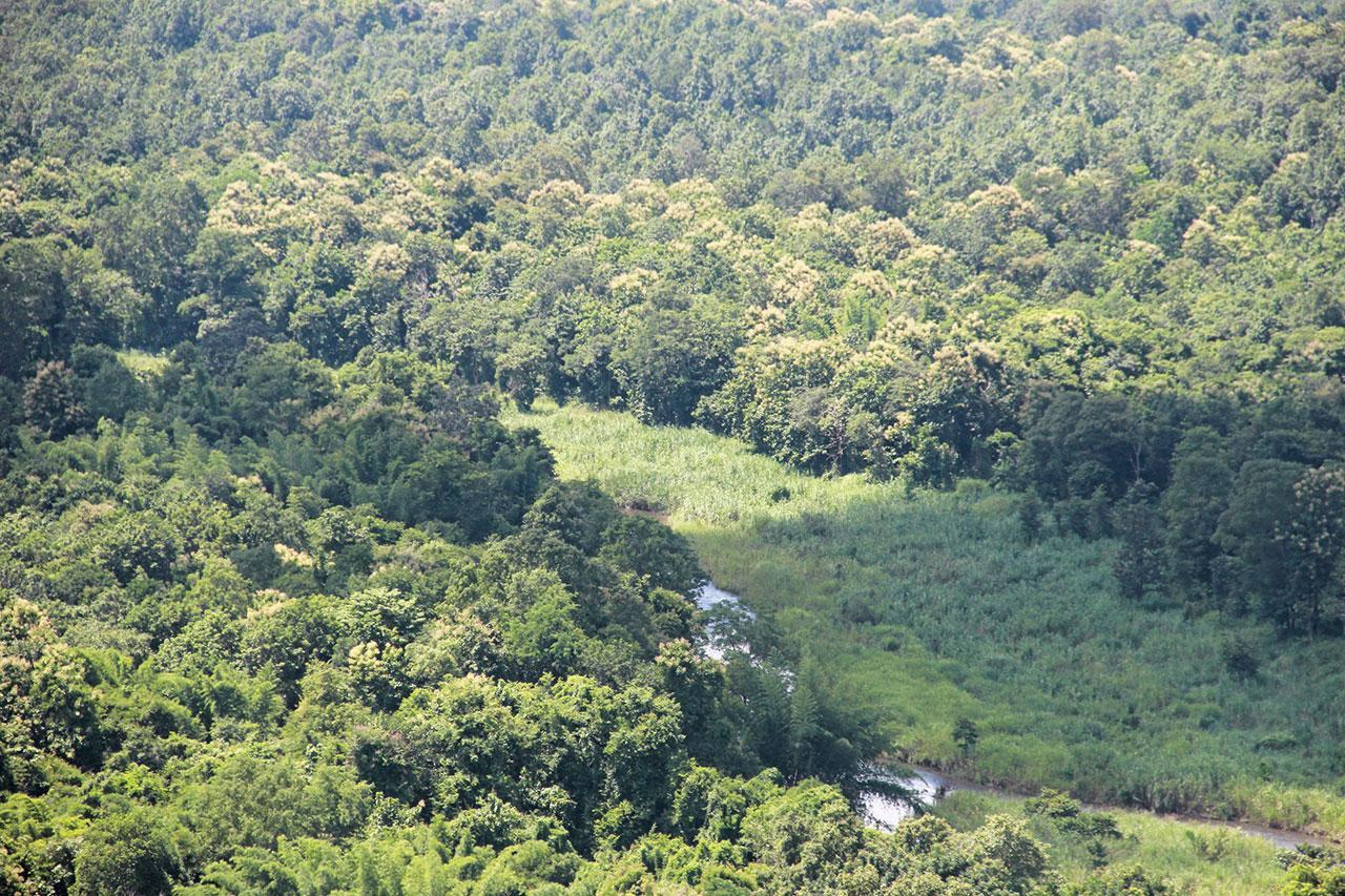 ป่าอันอุดมสมบูรณ์
