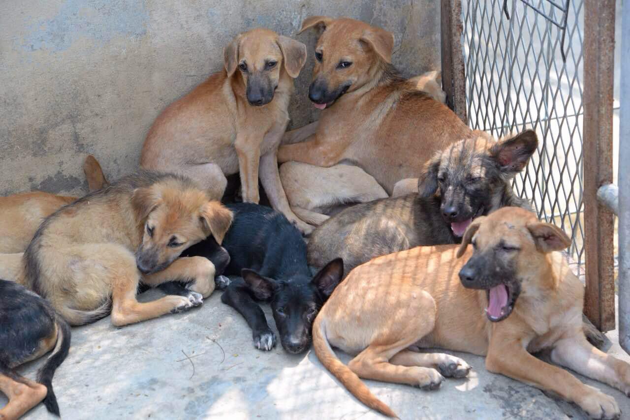 โดยธรรมชาติสุนัข เป็นสัตว์ที่ใช้ชีวิตและนอนแนบกับพื้น มีโอกาสสูงที่เต้านมจะได้รับความสกปรกจากสิ่งปนเปื้อนต่างๆ ทั้งแบคทีเรียและเชื้อรา