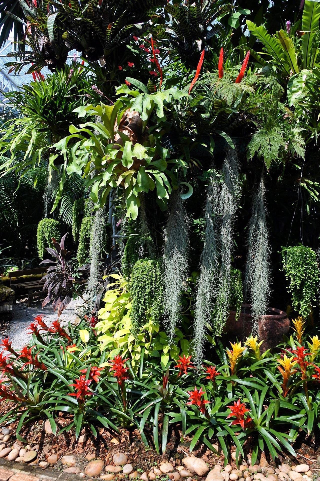 สับปะรดและเคราฤาษีในเรือนร่มไม้.