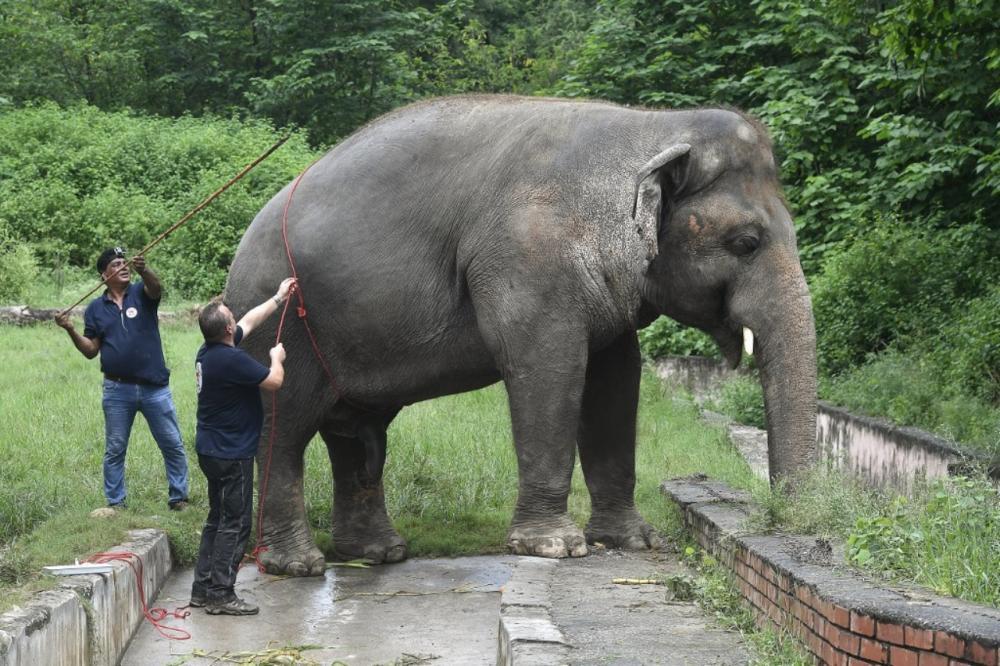 'คาวาน' ช้างโดดเดี่ยวที่สุดในโลก ซึ่งเคยอยู่ในสวนสัตว์ที่ปากีสถาน  ได้รับความช่วยเหลือจนได้ไปอยู่ในกัมพูชาแล้ว
