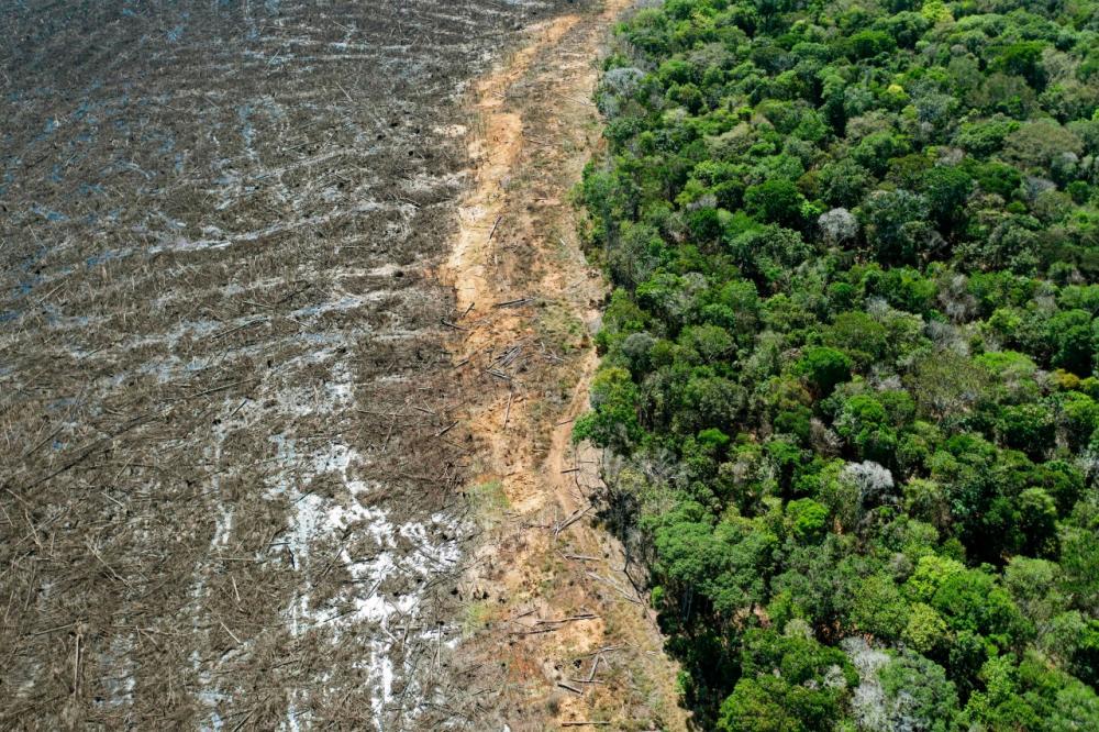 ป่าแอมะซอนถูกทำลายอย่างน่าตกใจ
