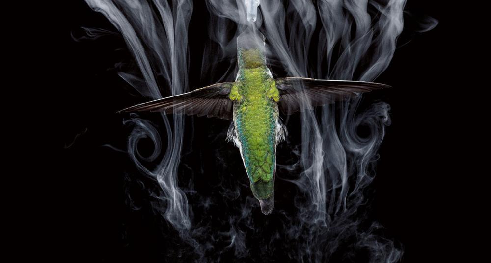 นกส่วนใหญ่สร้างแรงขึ้นด้านบน หรือที่เรียกว่าแรงยก (lift force) ได้อย่างมากด้วยจังหวะกระพือปีกลงเท่านั้น กุญแจของความสามารถในการบินอยู่กับที่ของนกฮัมมิงเบิร์ดอยู่ที่การเคลื่อนไหว ซึ่งเกือบสมมาตรของปีก ช่วยให้มันสร้างแรงยกได้ทั้งในจังหวะกระพือปีกขึ้นและลง นักวิจัยใช้เครื่องพ่นหมอกด้วยคลื่นเสียงความถี่สูง พ่นหมอกบางๆ เข้าไปในอากาศ จึงสามารถสังเกตกระแสลมวนที่นกฮัมมิงเบิร์ดหน้าสีชมพูตัวนี้ทำให้เกิดขึ้นในช่วงสิ้นสุดการกระพือปีกครึ่งจังหวะแต่ละครั้ง คือเมื่อปีกพลิกทำมุมกว่า 90 องศา แล้วกระพือกลับทิศทาง