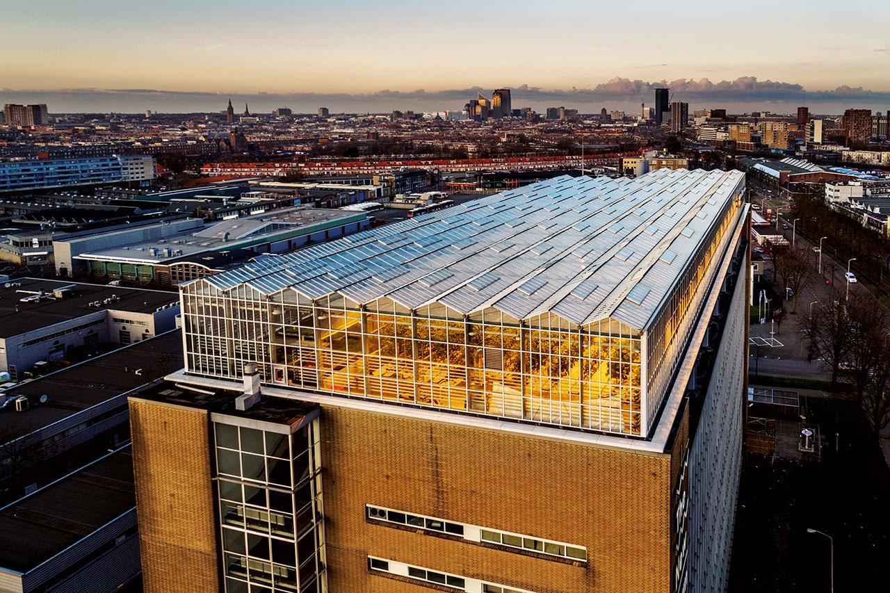 """ไร่แห่งหนึ่งบนหลังคาโรงงานเก่าในเมืองเฮกหรือเดอะเฮก (The Hague) ผลิตพืชผักและปลาด้วยระบบหมุนเวียน กล่าวคือ ของเสียจากปลาเป็นปุ๋ยให้กับพืช ซึ่งทำหน้าที่กรองน้ำให้ปลา ร้านอาหารในท้องถิ่นต่างภูมิใจนำเสนอผักและ """"นักว่ายน้ำกลางเมือง"""" หรือปลาสดจากไร่แห่งนี้"""