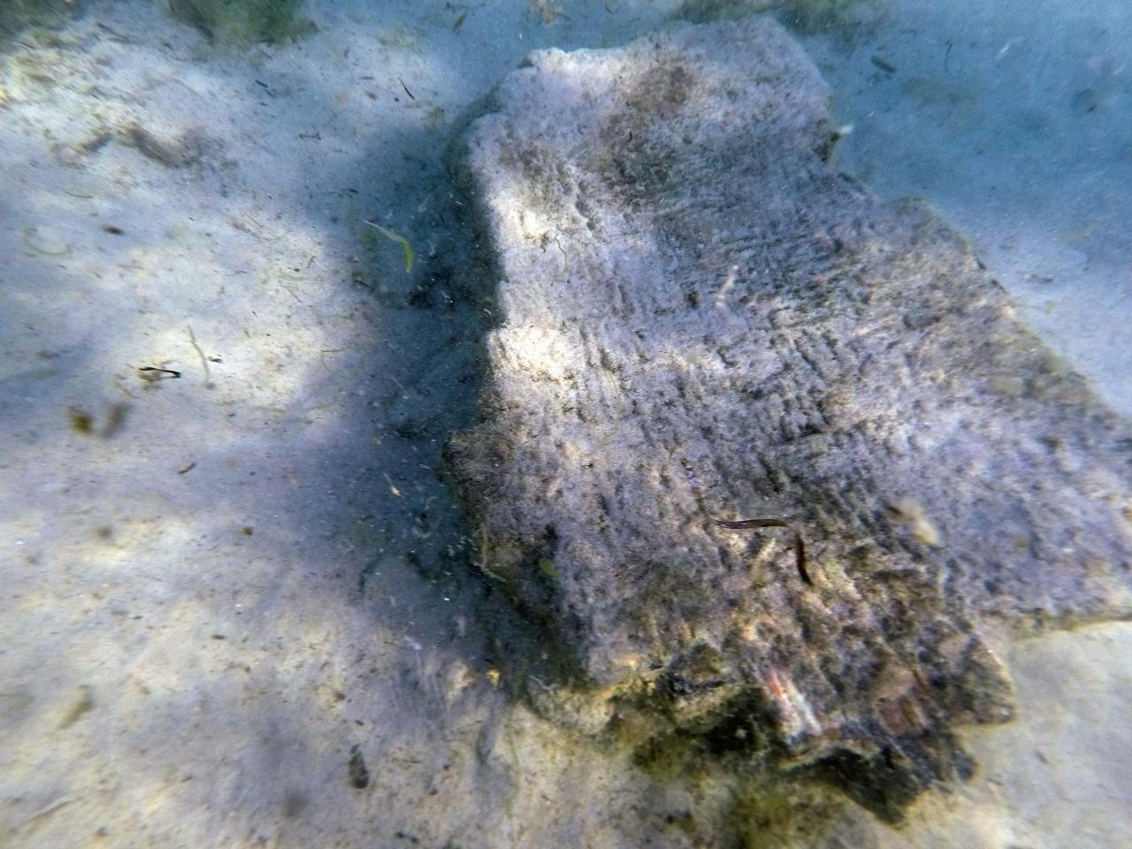 ภาพจากสถาบันมรดกแห่งชาติตูนิเซีย และมหาวิทยาลัยซาสซารี แสดงให้เห็นวัตถุโบราณใต้ทะเลในพื้นที่ที่เคยเป็นเมือง เนอาโปลิส ของอาณาจักรโรมันโบราณ