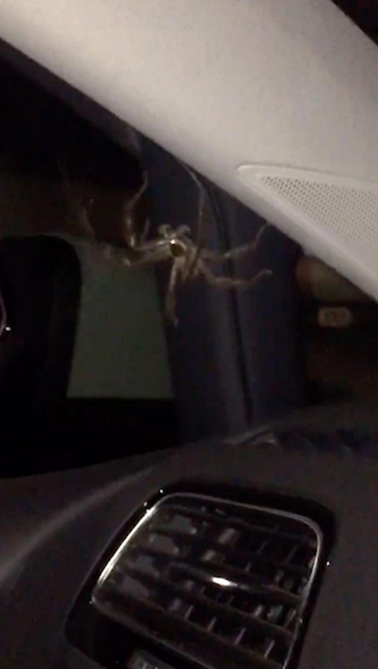 สยองมาก...แมงมุมตัวใหญ่อยู่ในรถ