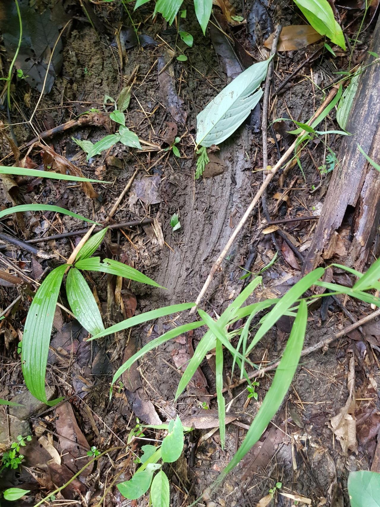 เจ้าหน้าที่พบร่องรอยการลื่นไถลในป่า