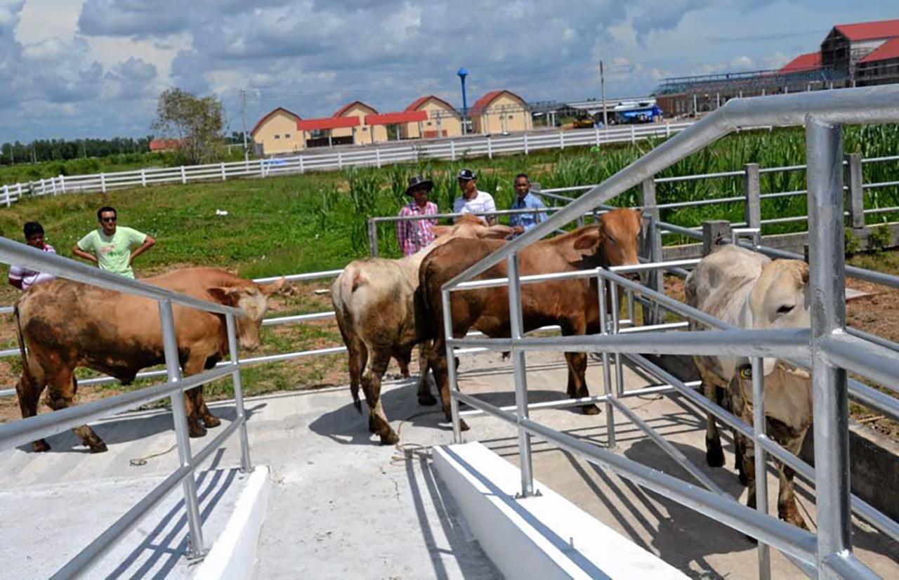 พื้นที่เลี้ยงวัวภายใน ศูนย์ปฏิบัติการโคเนื้อศรีวิชัย (พัทลุง) ภายใน วิทยาลัยเกษตร และเทคโนโลยีพัทลุง ต.ควนมะพร้าว อ.เมือง จ.พัทลุง กว่า 300 ไร่.
